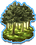Forest Near Corte