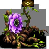 Antenolla B (Ivy)