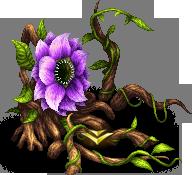 Antenolla D (Leaves)