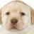 Bandicootfan63's avatar