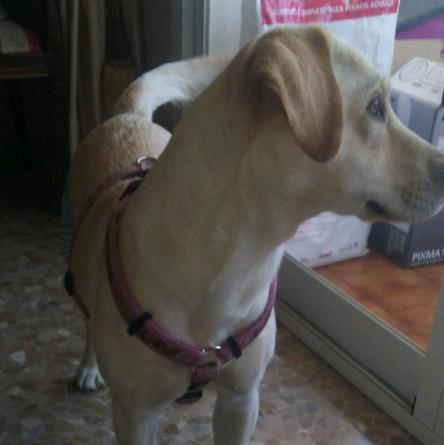 Elena129's avatar