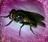 Auauua's avatar