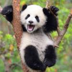 Panda67uio's avatar