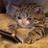 Hiyori Sonozaki's avatar