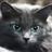 L'oeil de geai's avatar