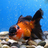 Lava Larry's avatar