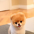 Puppydoge