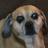 Daxus Inferno's avatar