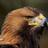 Bird Obsession's avatar
