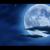 The Moon, Shining In The Night Sky