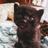 ChelseaLovelace19's avatar