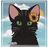 Savuturkki's avatar