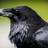 Theforest04's avatar
