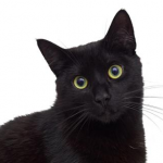 Julesandherbooks's avatar