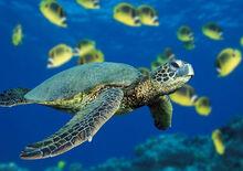 Turtle profilePic.jpg