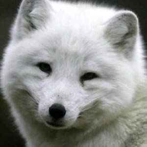WinterWarFoX's avatar