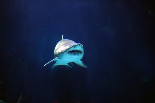 Uh Oh! Shark!