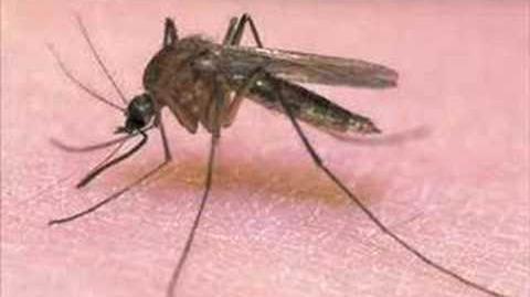 Piosenka o komarze xD
