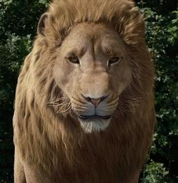 Aslan Lionheart.png