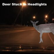 Deer Stuck In Headlights