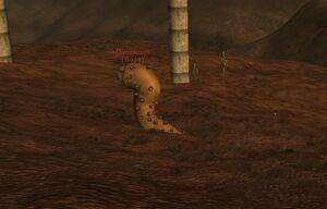 Duneworm sighting.jpg