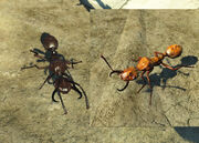 FO4 Overgrown Forager Ant.jpg