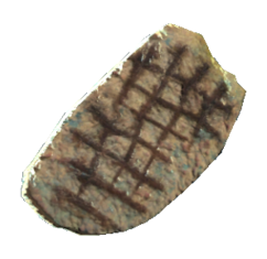 Stingwing filet.png