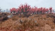 FO76 Overgrown sundrew grove (10)