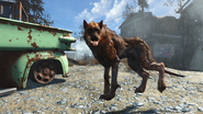 FO4FH Wolf3