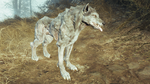 Fo4FH grey wolf.png