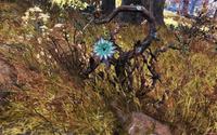 FO76 Fever blossom plant 6