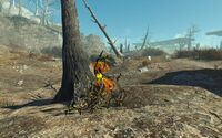 FO4NW External 97