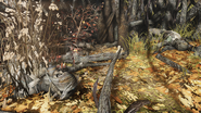 FO76 Cultist Totems (Point Pleasant) (1)
