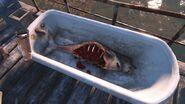 FO4 Baby sea creature