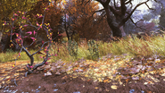 FO76 Flora Forest 2