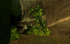 Fallen Rock Cave.jpg