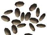 Pinienkerne