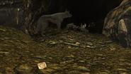 FNV Coyote den 3