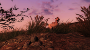 FO76 Creatures chicken 1