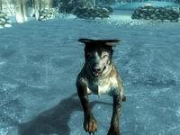 Guard dog OA