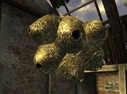 FNV cazador nest