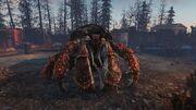 Giant hermit crab.jpg