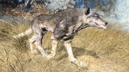 FO4FH Wolf5