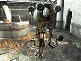 Molly (Fallout 4)