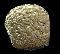 Brain fungus.png