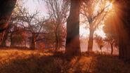 Ls sunsetfog