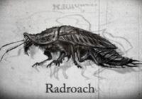 Roachstory