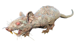 FO4NW Rad-rat.png