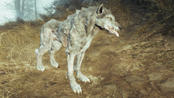 FO4FH Wolf4.png