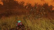 FO76 New flora blast zone 17